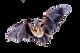 bat removal.png