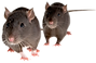 rodent removal.png