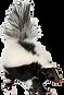 skunk removal.png