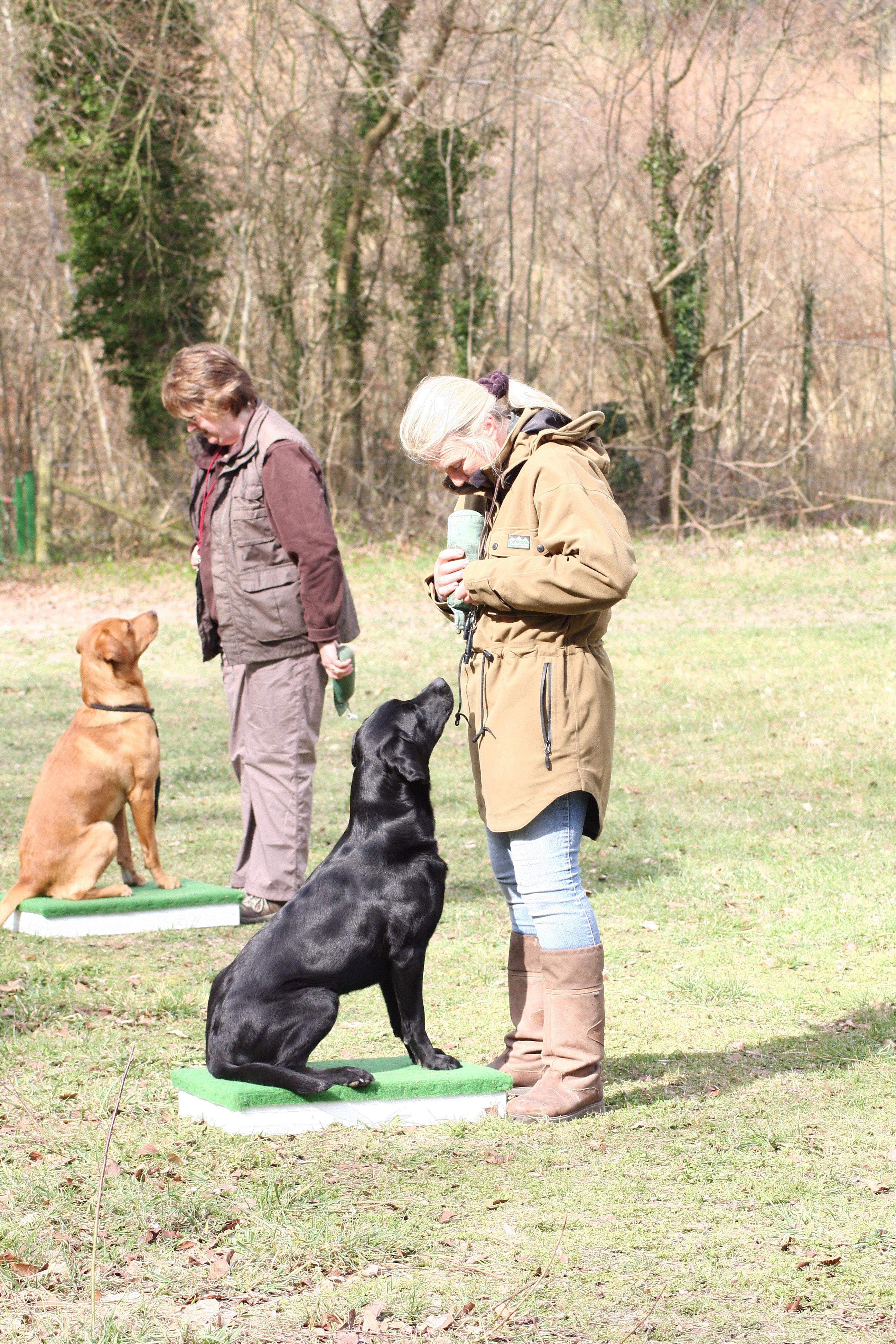 Smiles Dog Training