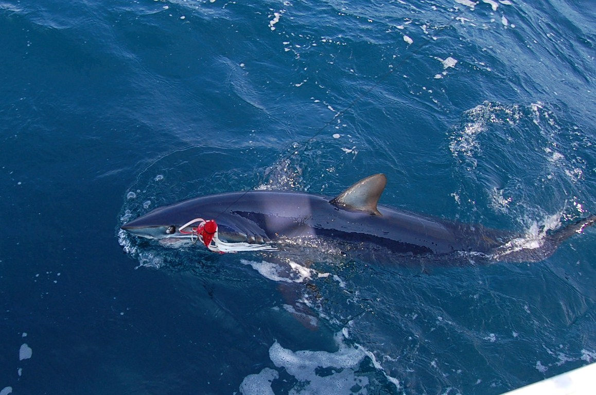 Melanie anne sportfishing charters cape may new jersey for Shark fishing nj