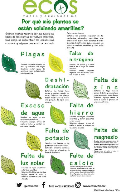 Infografia Hojas ECOS.png