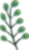 Plant%252520%252520%252520_edited_edited