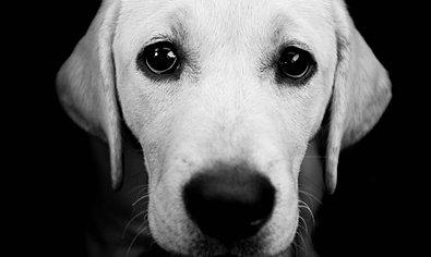 ΣΟΣ εκπέμπουν οι αδέσποτοι σκύλοι στον Ισθμό της Κορίνθου...