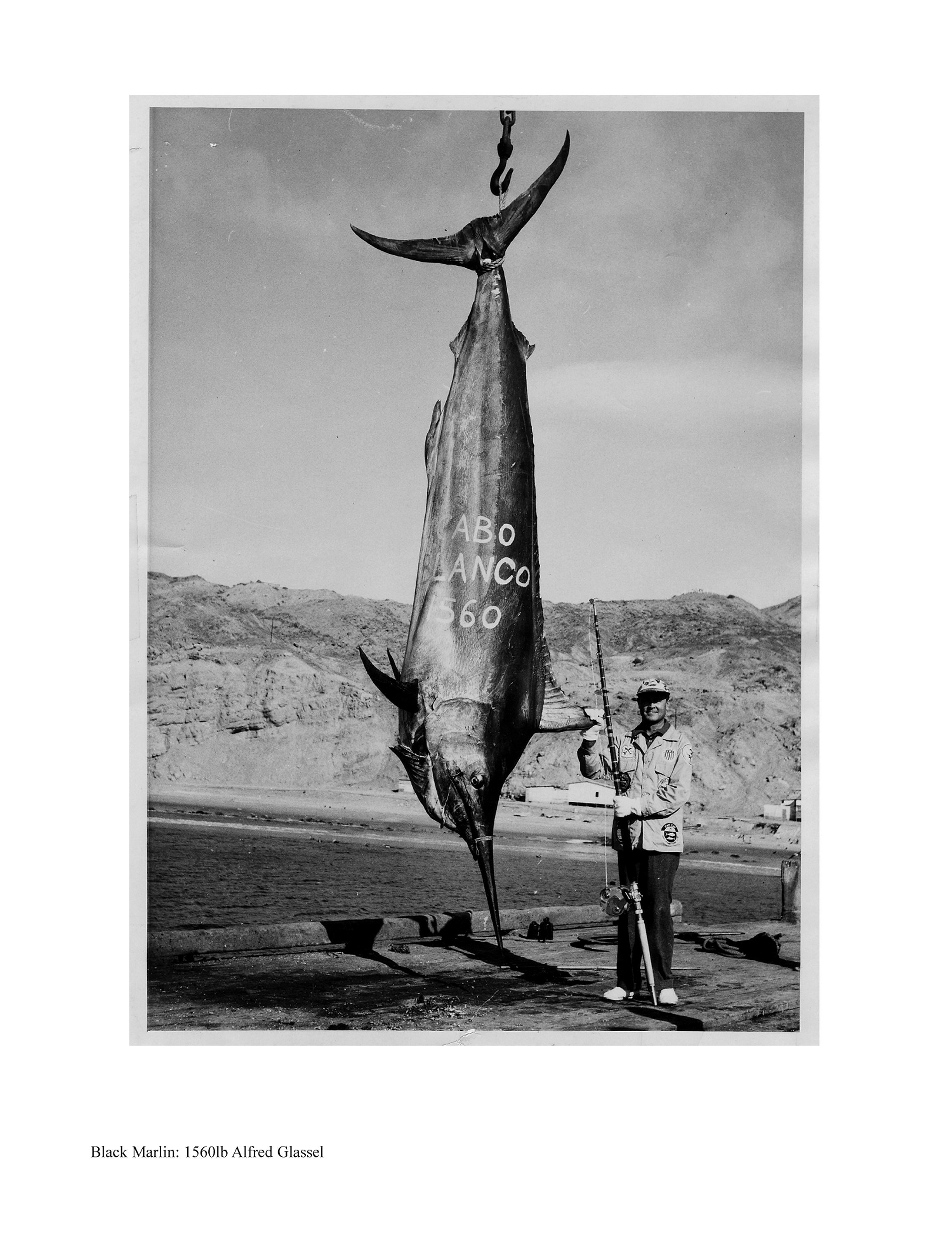 Image result for glassell world record marlin