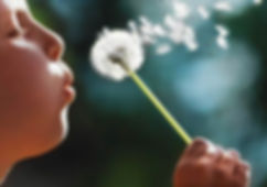 dandelion child-blowing-dandelion.jpg