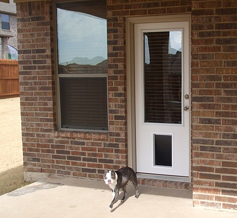 Doors4petsandpeople home for Exterior door with built in pet door