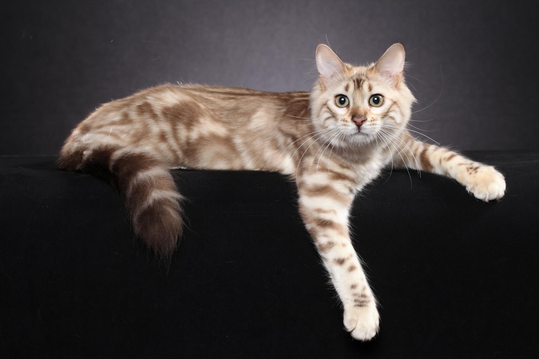 male cat calling female