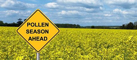 Allergy Pollen Field