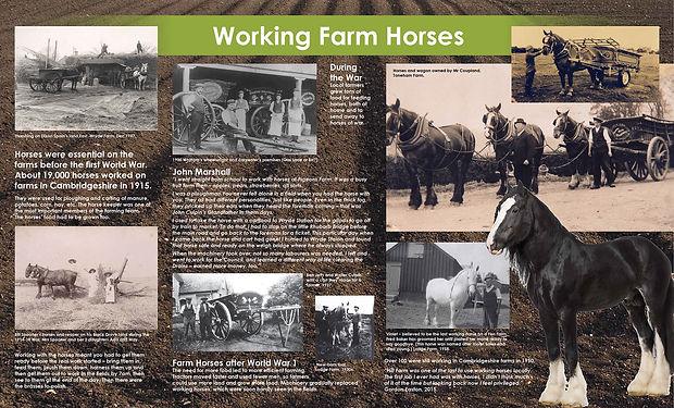 Horses-board.jpg