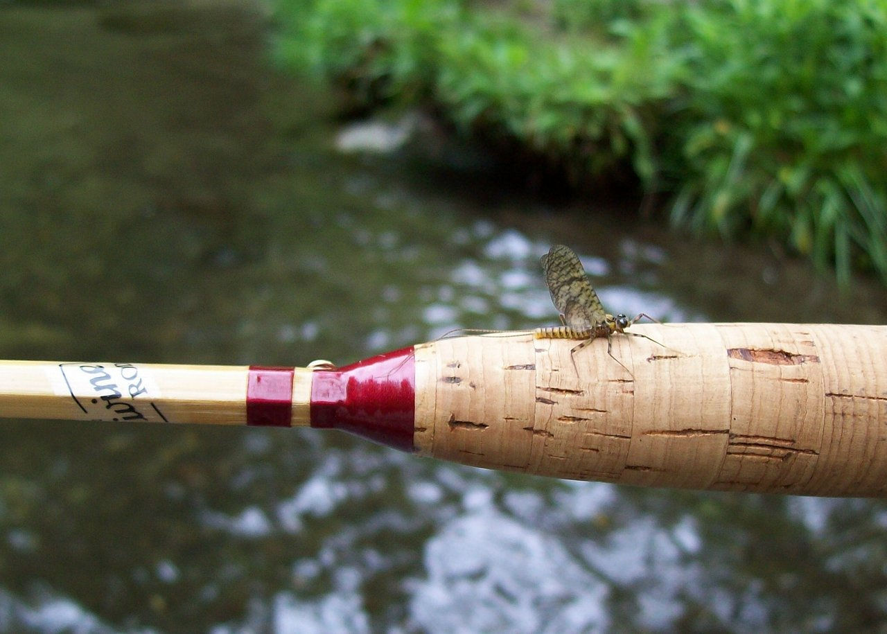 Mayfly on Fairy Rod.jpg