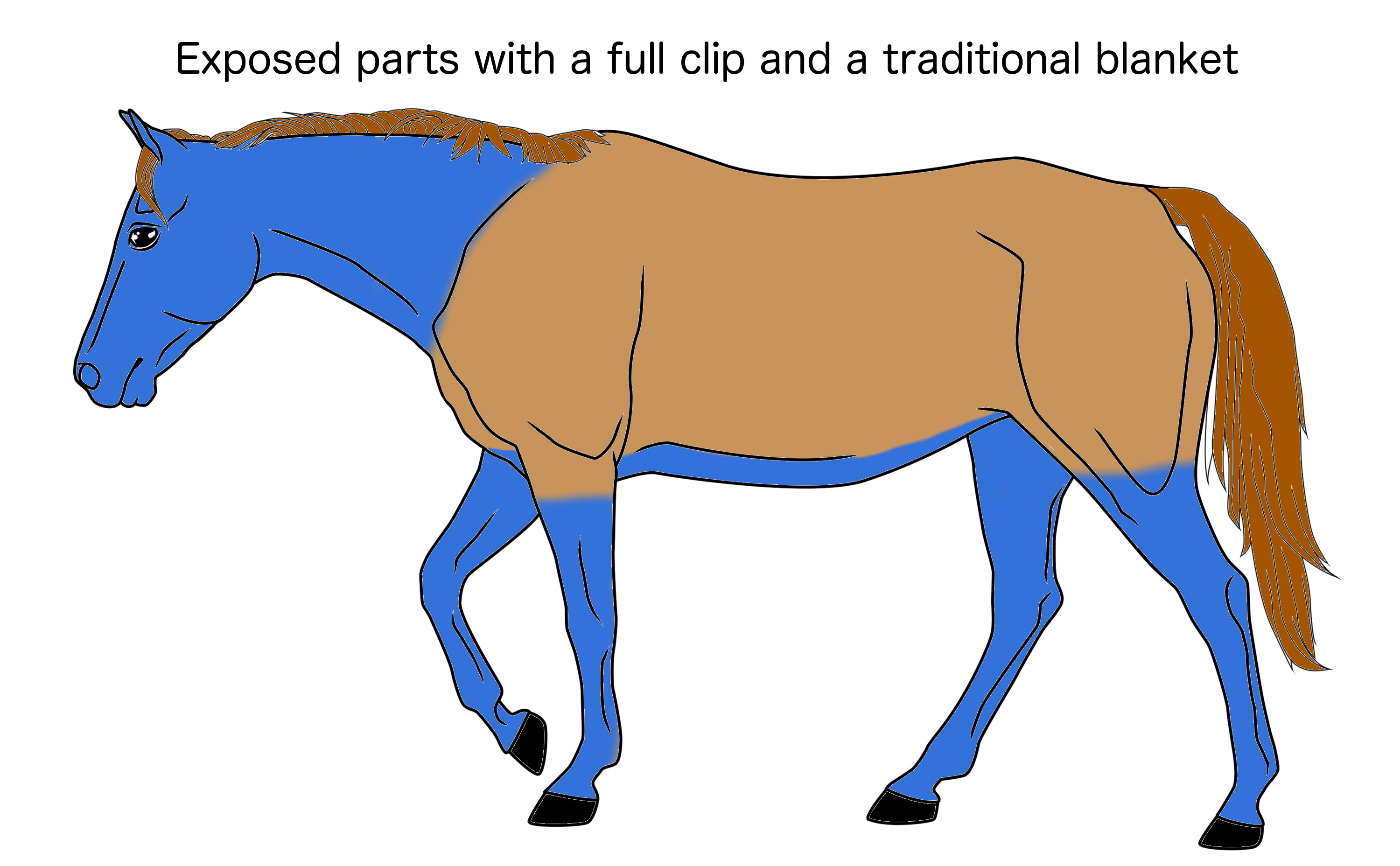 Horse Clipping - The Ideal Clip and Blanket | indubioproequus