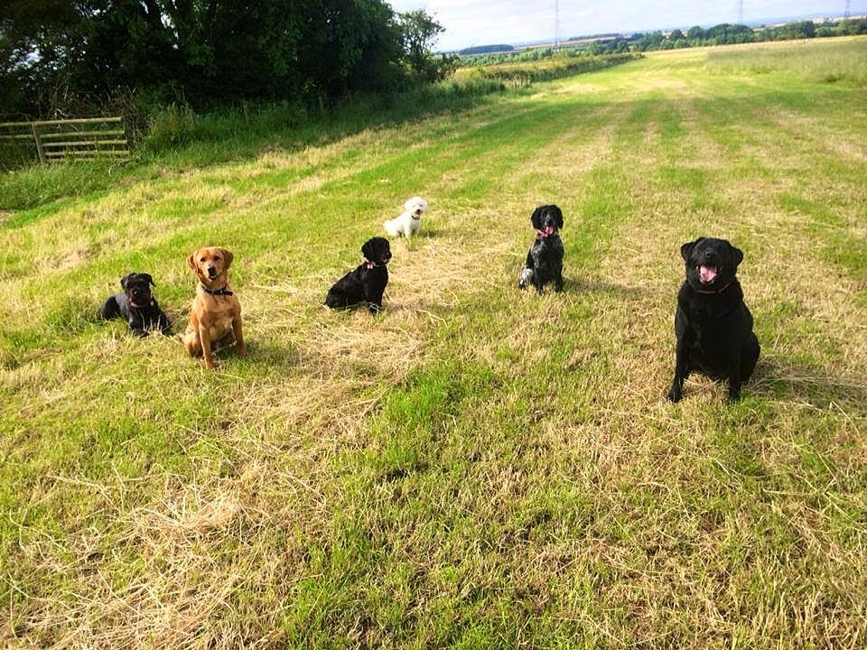 Dog Training North East