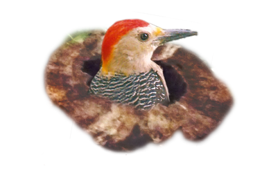 mascota con eslogan transp.png