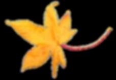 Geel-blad.png