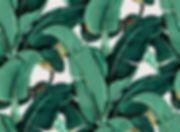 palm leaf 2.jpg