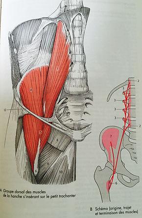 Lombalgie et muscle ilio-psoas.