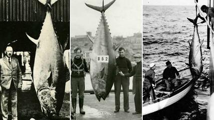 Lorenzo Mitchell-Henry - Tunny Fishing Scarborough