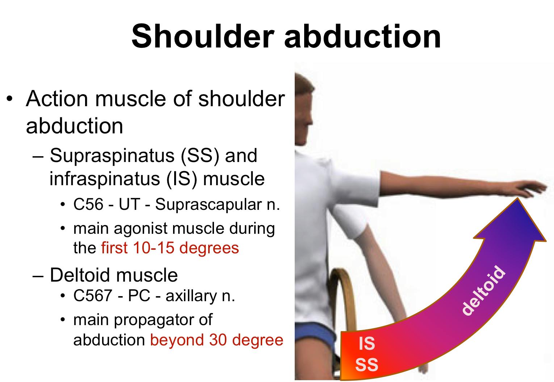 Shoulder Abduction Reconstruction In Acute Brachial Plexus