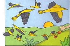 How The Mango Birds Were Born 2