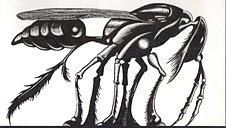 Bug Lee Brown Coye