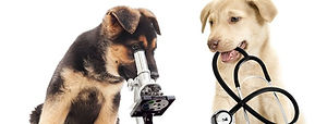 Dogs-with-microscope-and-stethoscope_edited.jpg
