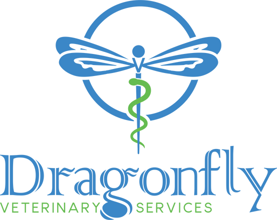 Logo Dragonfly.png