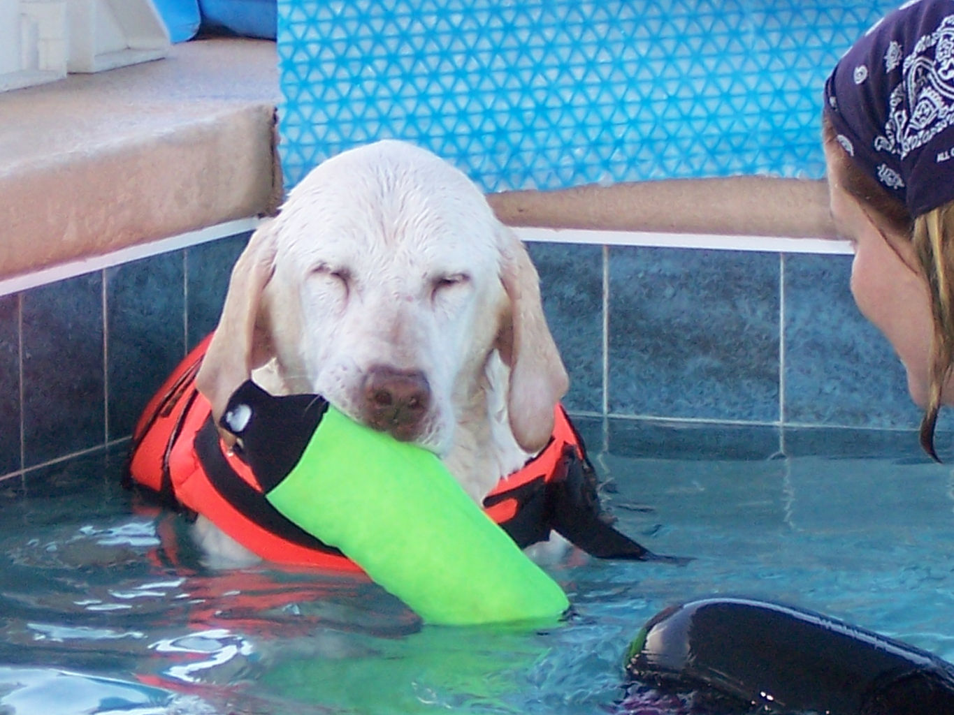 Canine physical therapy - Learn How To Swim Dog Lakeland