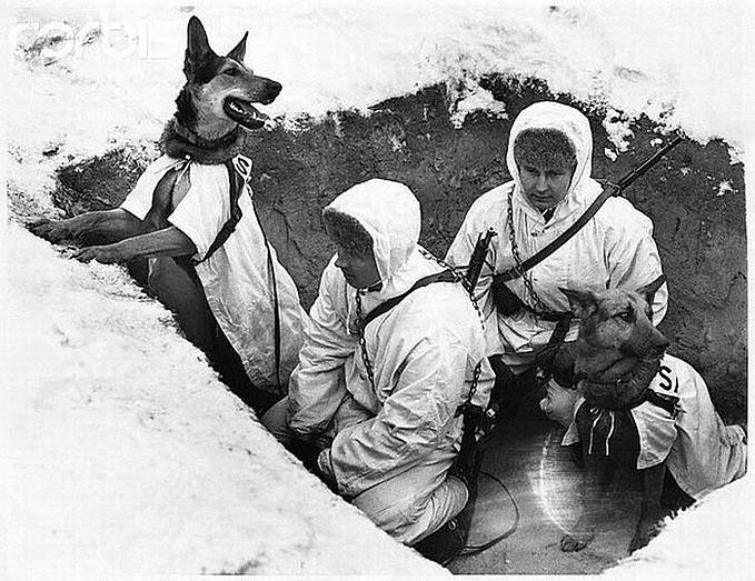 Верные псы войны