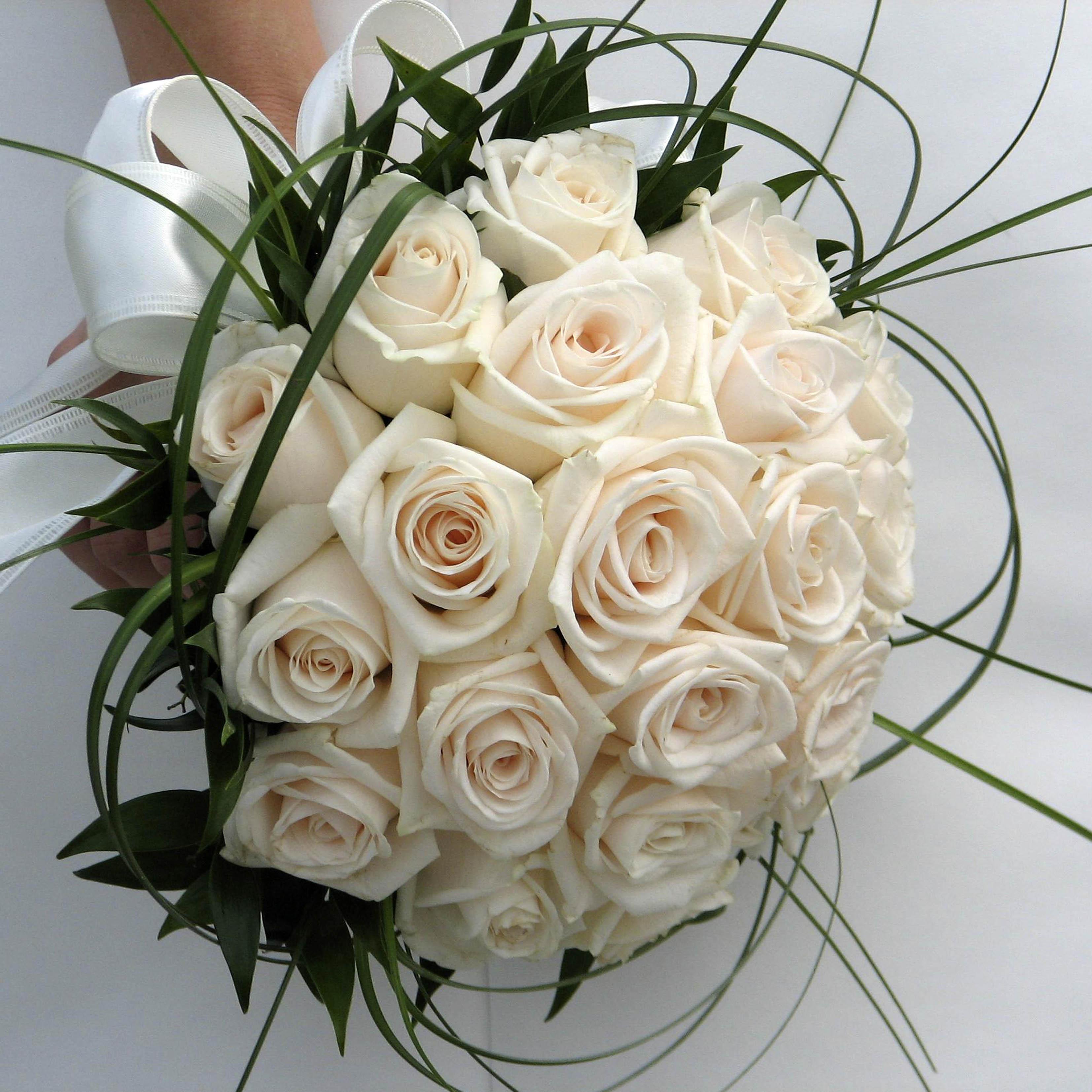Роза цвет айвори фото 5