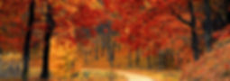 wooded lots-crop-u9066.jpg