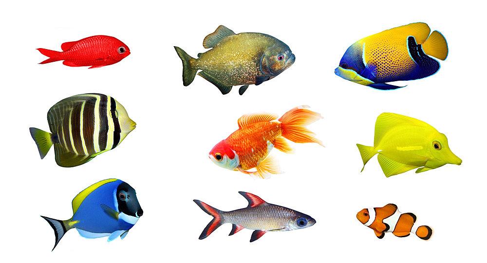 mypetfix   tropical fish