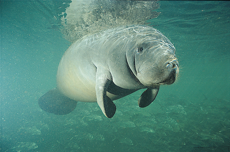 Фото морських тварин 4 фотография