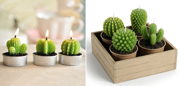 la folie des cactus m 39 a piqu e my sweet cactus le. Black Bedroom Furniture Sets. Home Design Ideas
