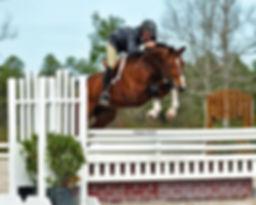 Apiro Jumping.jpg