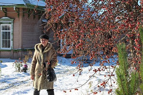 Картинки яблонька зимой