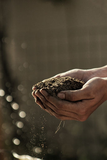 soil.jpg