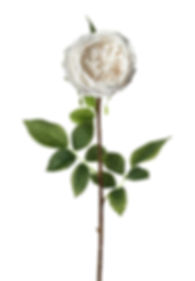 rose-stem-lora-real-touch-h710mm-white.j
