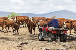 Farmer-Quad-Bike.jpg