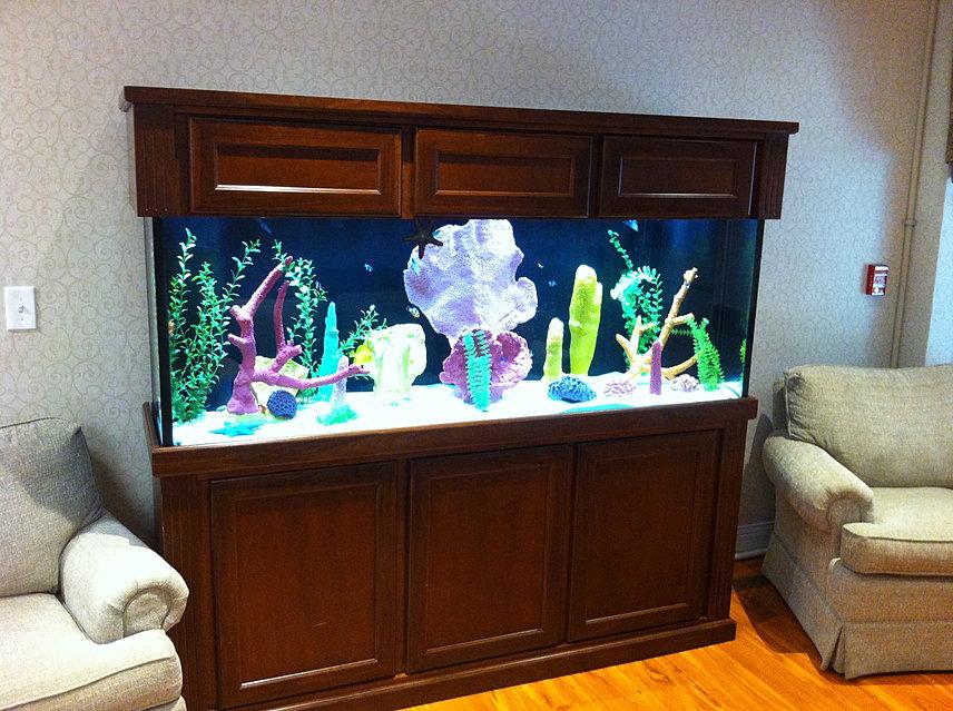Custom Aquariums  Fish Tank Design  RI  Services  exhibit photos