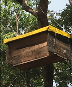 Honey farmers.png