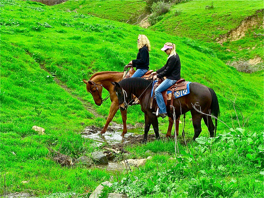 Nojoqui Horse Ranch Boarding Training Lessons And Trail