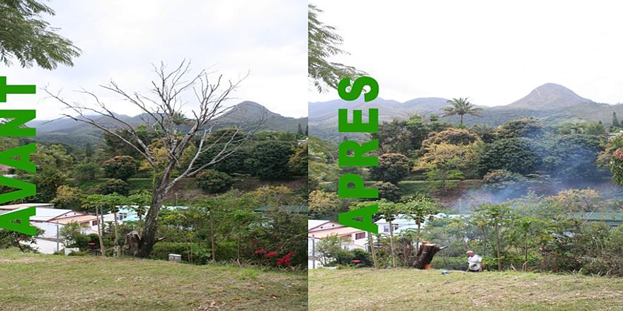 jardinickel jardinier lagage et abattage d 39 arbre noum a