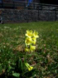 Natura incontaminata vicino a Bellamonte e Hotel Garni Belvedere per una vacanza tranquilla e rilassante circondati dai meravigliosi fiori di Bellamonte