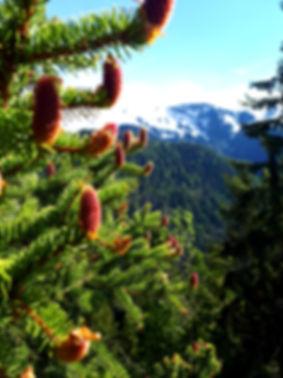 Natura incontaminata vicino a Bellamonte e Hotel Garni Belvedere per una vacanza tranquilla e rilassante