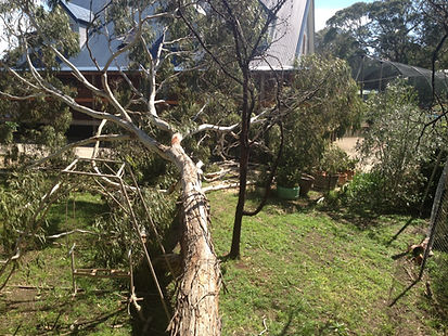 Adelaide Hills Tree Removal. Adelaide Hills Tree Services.
