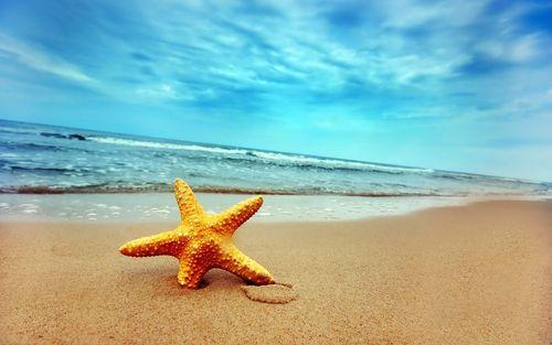 starfish_on_beach_sand-wide_large.jpg