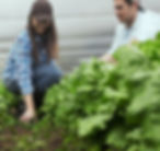 Farmer 3.jpg