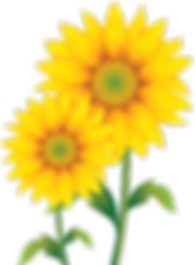 IMGBIN_common-sunflower-sunflower-seed-p