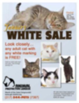 White Sale 2020.jpg